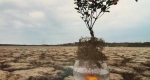 Soil Solution: Cop 21 è anche tutela del suolo