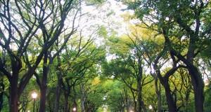 """""""Qualità dell'ambiente urbano"""" – XI Rapporto Ispra"""