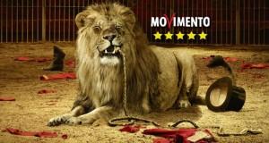 Rescaldina: approvato il regolamento tutela animali del M5S