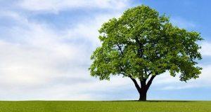 Per fare il futuro ci vuole un albero