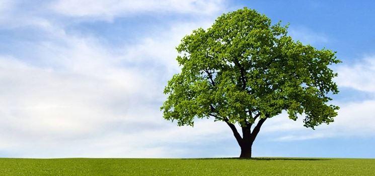 Per fare il futuro ci vuole un albero appuntamento il 19 for Foto di alberi da colorare
