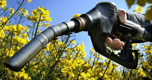 I biocarburanti spingono in su il costo del cibo