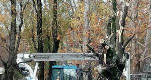 """Parco Bassini via all'abbattimento degli alberi, M5S: """"Basta con i progetti imposti dall'alto e con l'ambientalismo a parole"""""""