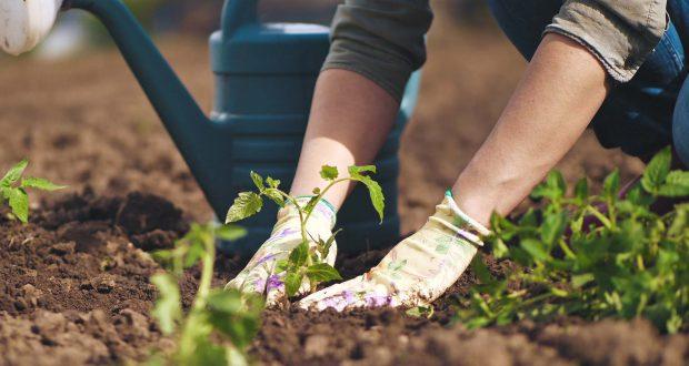 AGRICOLTURA: IL FONDO DI GARANZIA SFIORA I 400 MILIONI DI FINANZIAMENTI IN APPENA DUE MESI