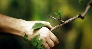Difendiamo gli alberi delle nostre città (Mozione alberi monumentali)