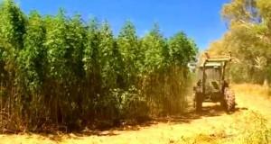Filiera agroindustriale della canapa