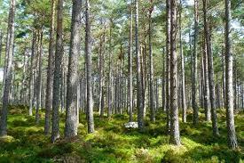 Stabilità: governo boccia emendamenti a protezione dell'ambiente