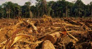 Il Brasile svende l'Amazzonia, un vero e proprio attentato all'umanità