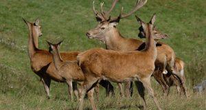 Istituiremo un gruppo di lavoro per la tutela della fauna