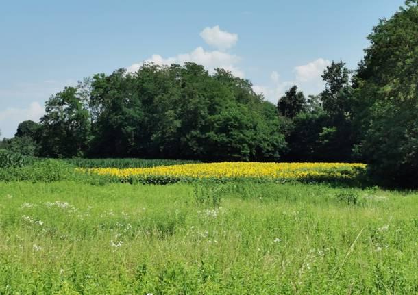 Il Movimento Cinque Stelle sostiene il progetto del Parco Agricolo Prealpino